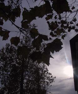 Sun Through Nov. Leaves