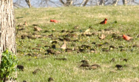 Cardinal feasting