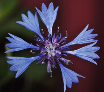 Flower close 05-20-2012